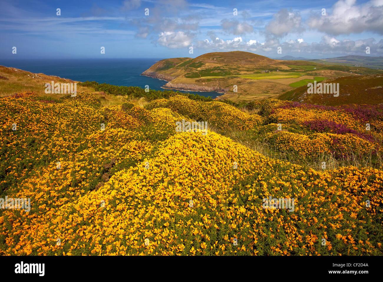 View of Lleyn peninsula coast from Myndd Mawr. - Stock Image
