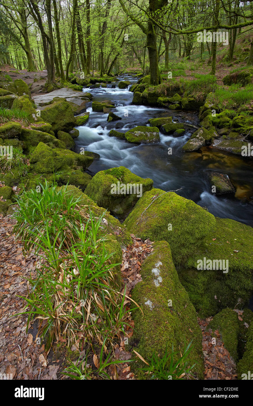 River Fowey flowing through woodland in the Golitha National Nature Reserve. Stock Photo