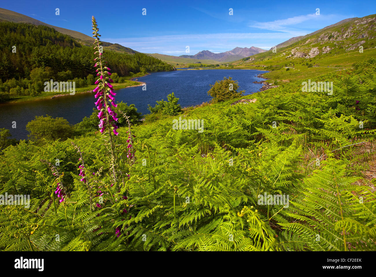 View over Llyn Mymbyr towards Snowdon, the highest mountain in Wales, in the distance. - Stock Image