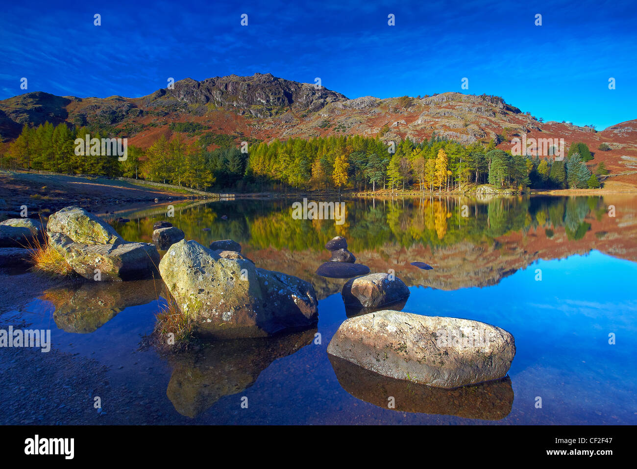 Forestry and hillside reflected in the still water of Blea Tarn in autumn. Stock Photo