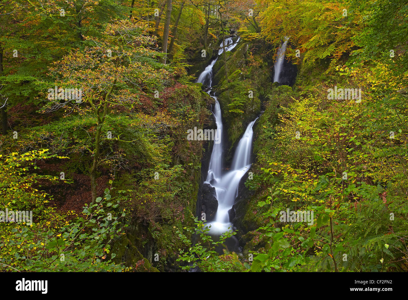 Stock Ghyll Force, a spectacular 70 foot waterfall in autumn. - Stock Image