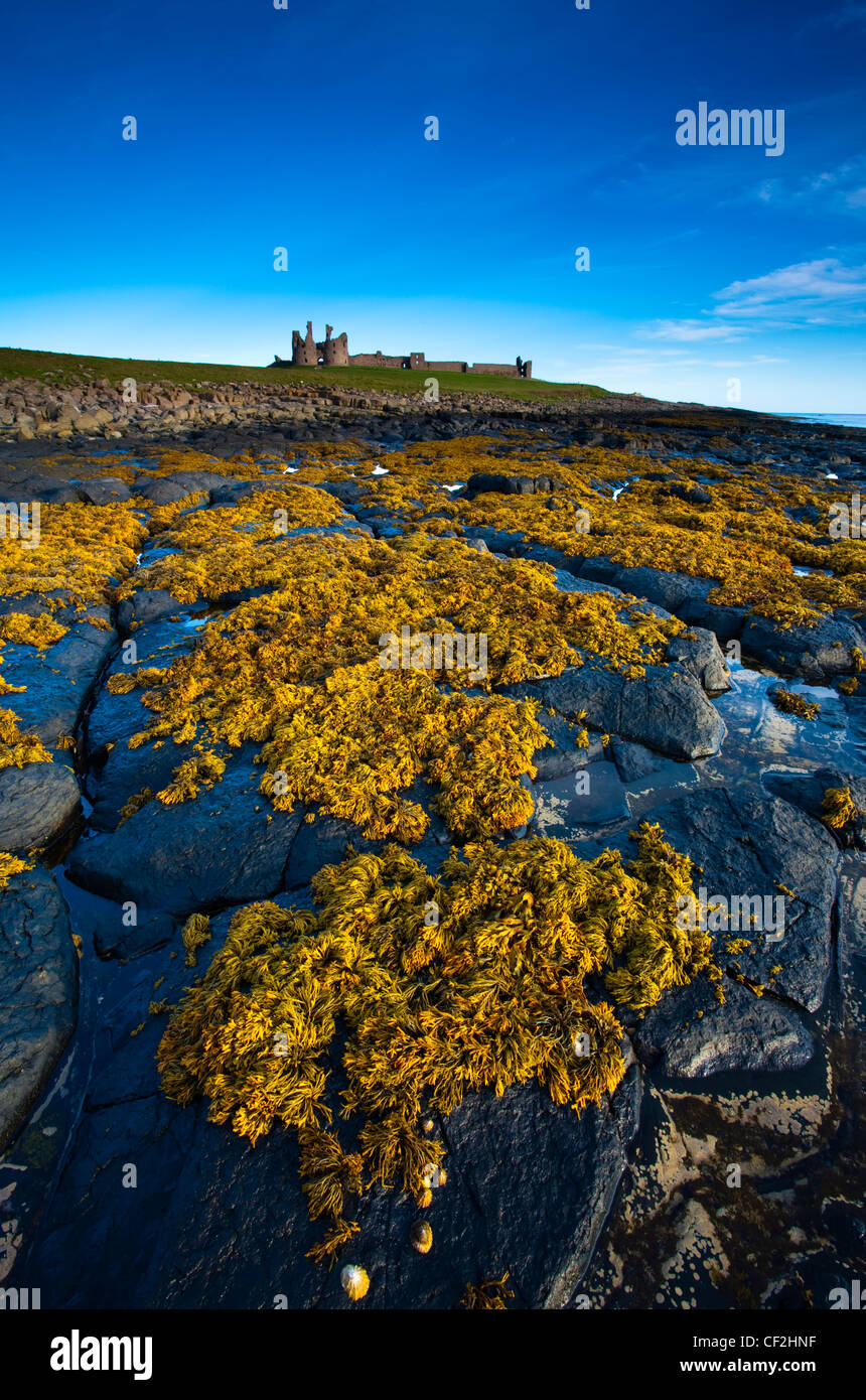 Dunstanburgh Castle and surrounding coastline at low tide, viewed from Cushat Stiel. - Stock Image