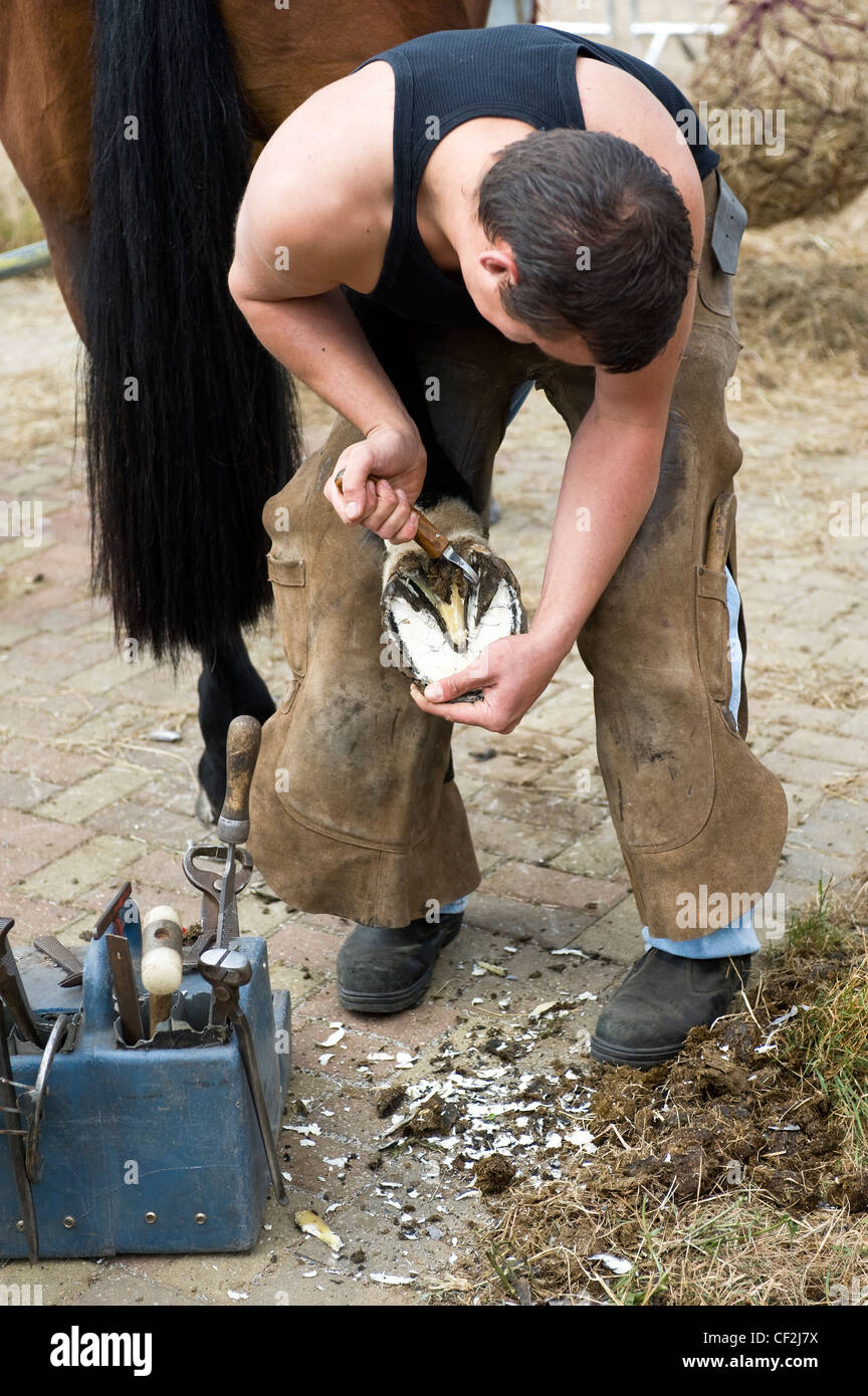 A farrier preparing a horses hoof for shoeing at the Orsett Show, one of the oldest one-day Country Shows in England. Stock Photo