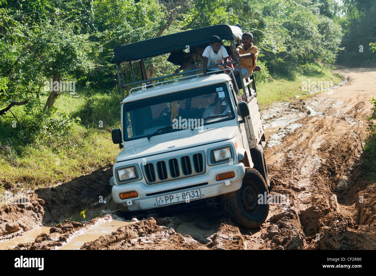 jeep stuck in the mud in Yala National Park, Sri Lanka - Stock Image