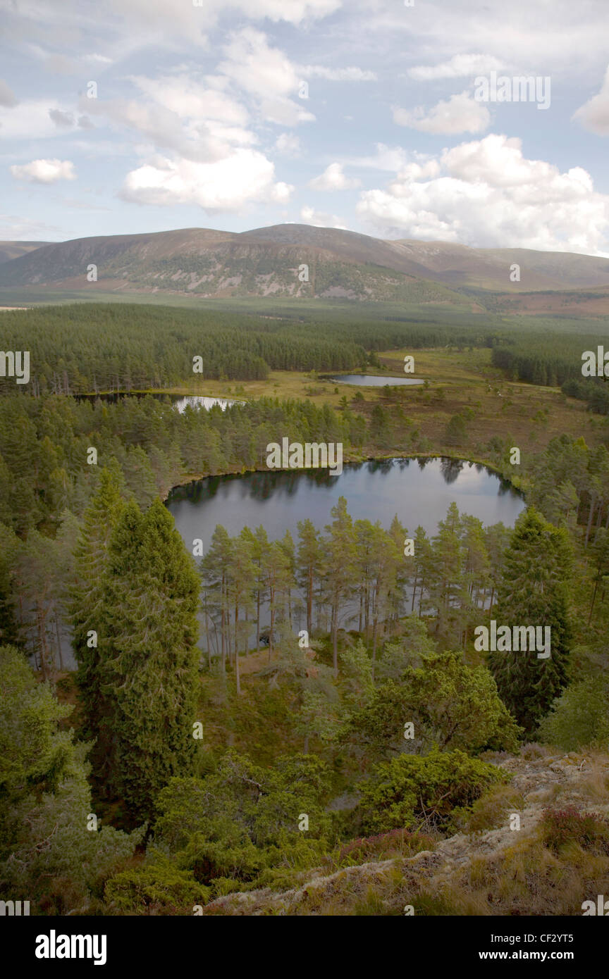 Conifer plantations and flood plains in Glen Feshie. Stock Photo