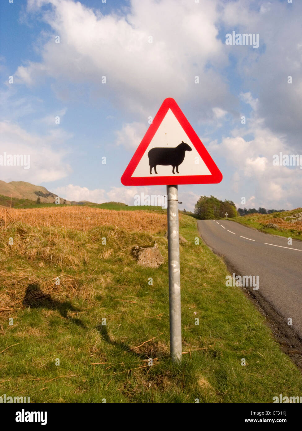 A red triangular warning sign by the side of a road advising that sheep may be in the road. - Stock Image
