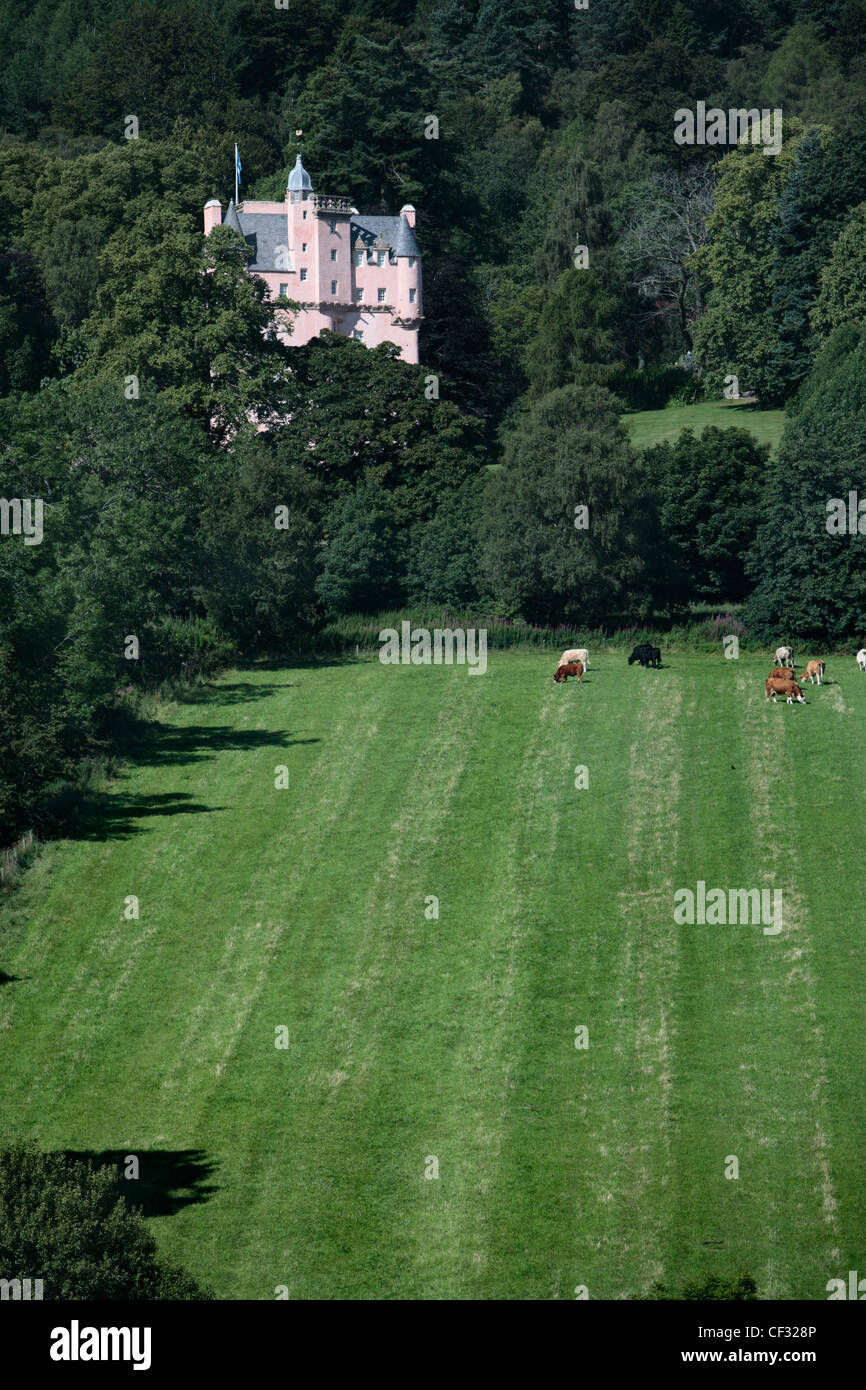 Cattle grazing in the estate of Craigievar Castle, a pinkish harled castle built in 1626 in the foothills of the - Stock Image