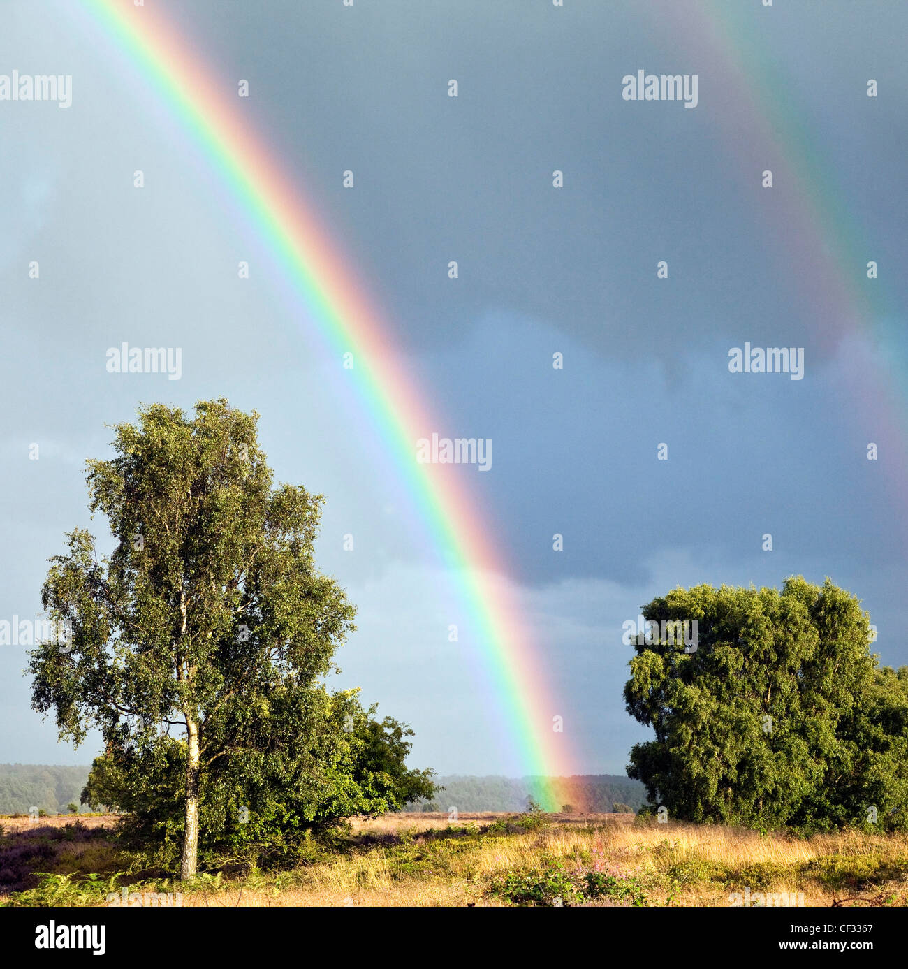 Rainbows across Grassland of Brocton Field on Cannock Chase Country Park AONB (area of outstanding natural beauty) - Stock Image