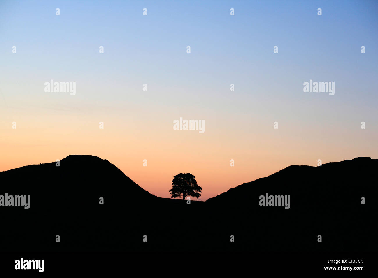 Sycamore Gap at Hadrian's Wall in silhouette. - Stock Image