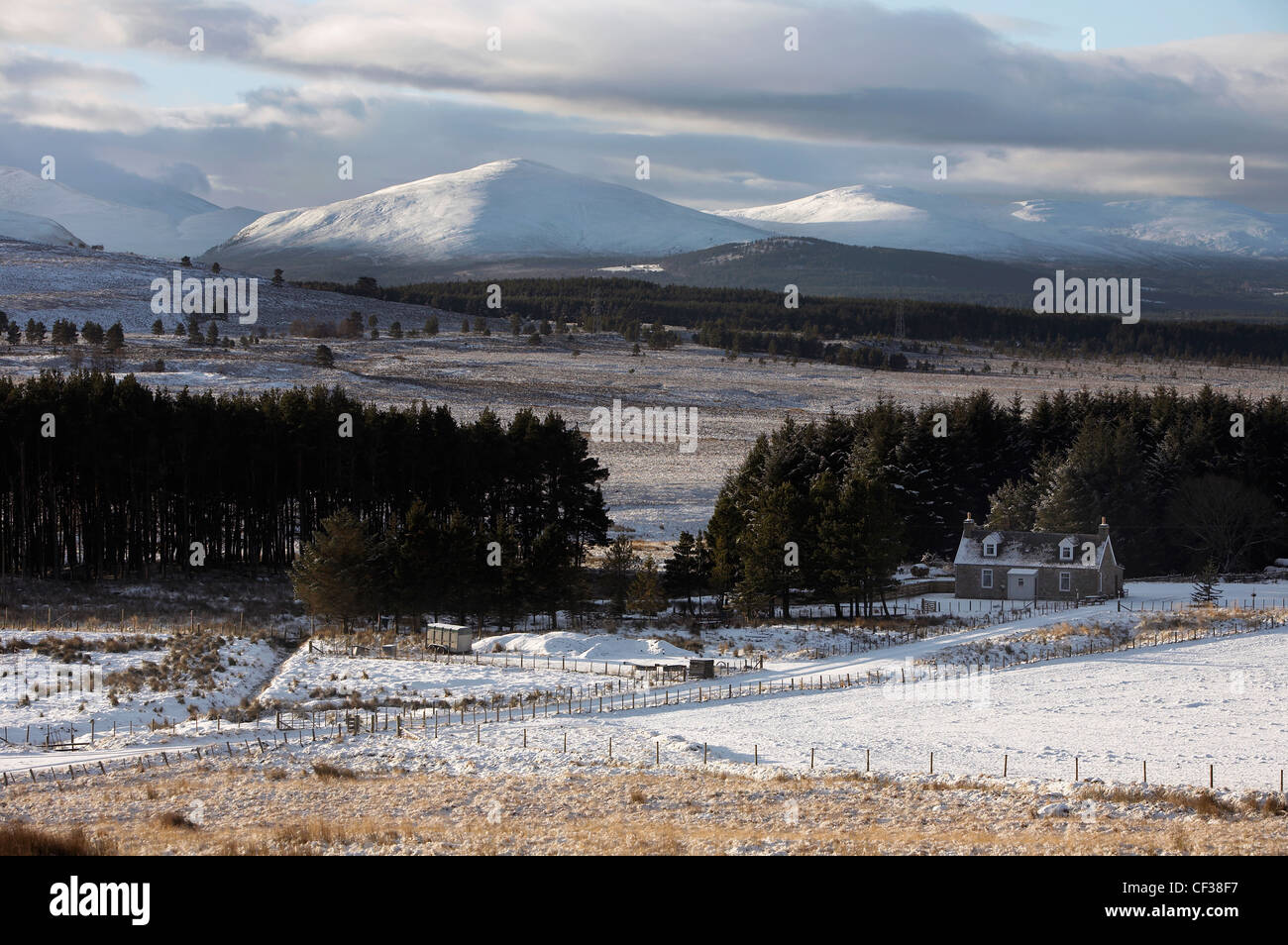 View over the Braes of Abernethy to the Cairngorm mountain range in Scotland. - Stock Image