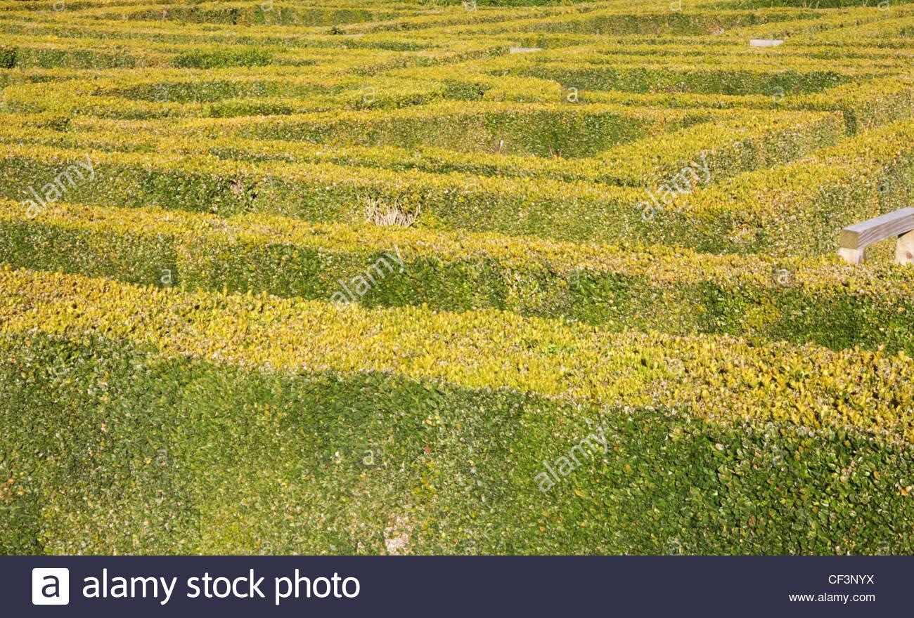 box hedging - Stock Image