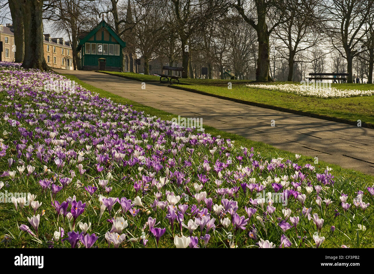 A Carpet Of Spring Flowers In Bloom At The Stray In Harrogate Stock