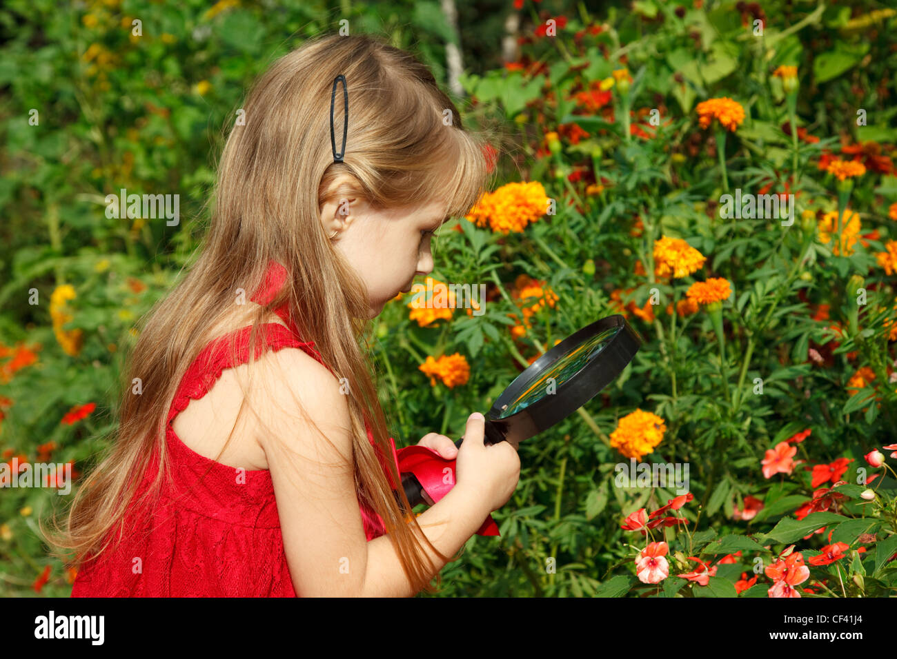 Little girl in red dress considers flower through magnifying glass. - Stock Image