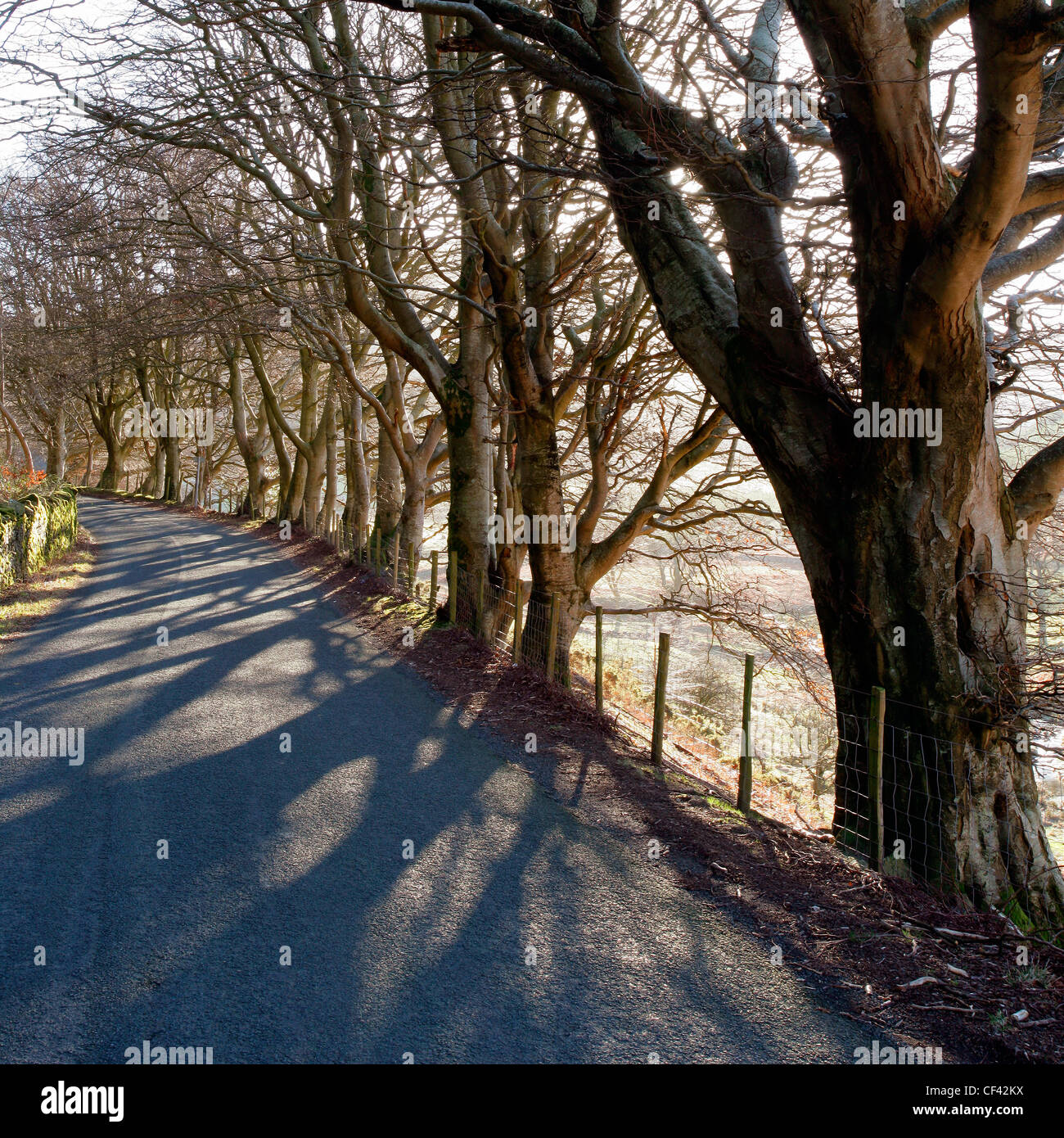 Sunlight filters through bare trees onto a country road in the Lake District. - Stock Image