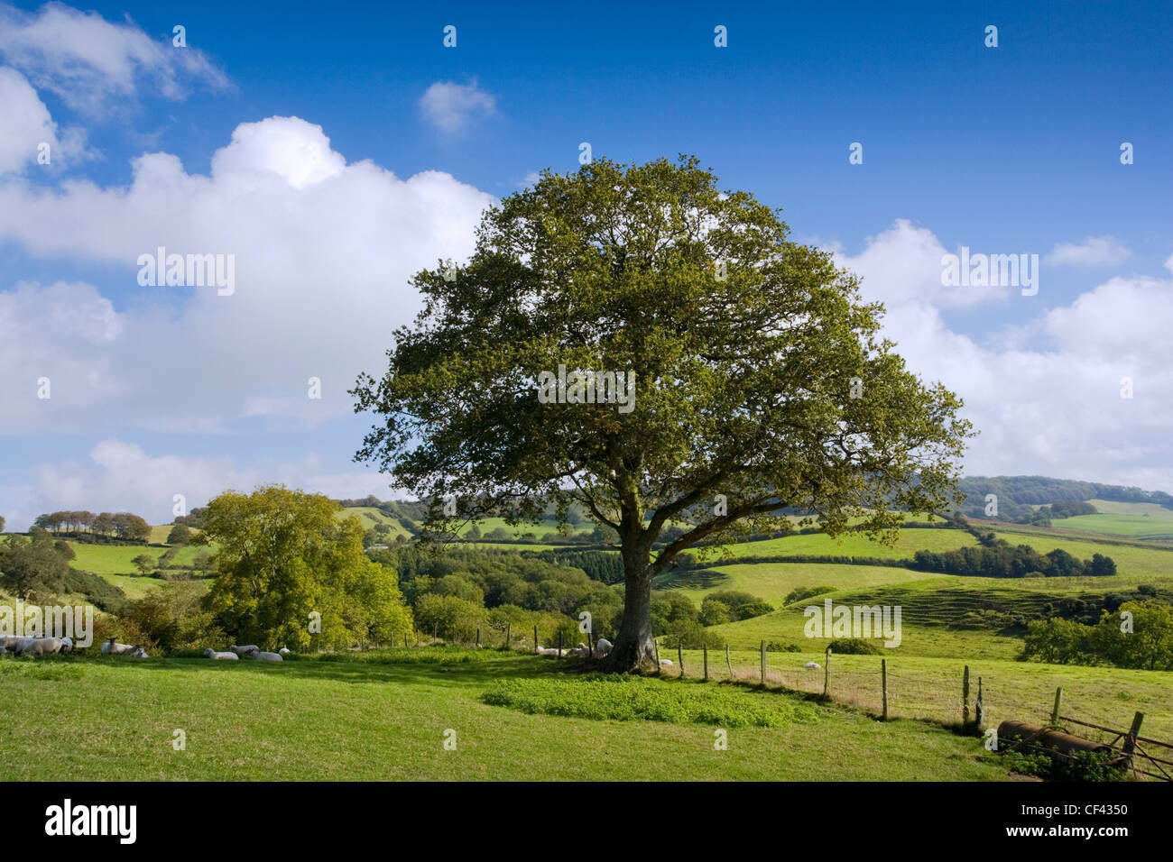 View across farmland and pastures from Birdsmoorgate. - Stock Image