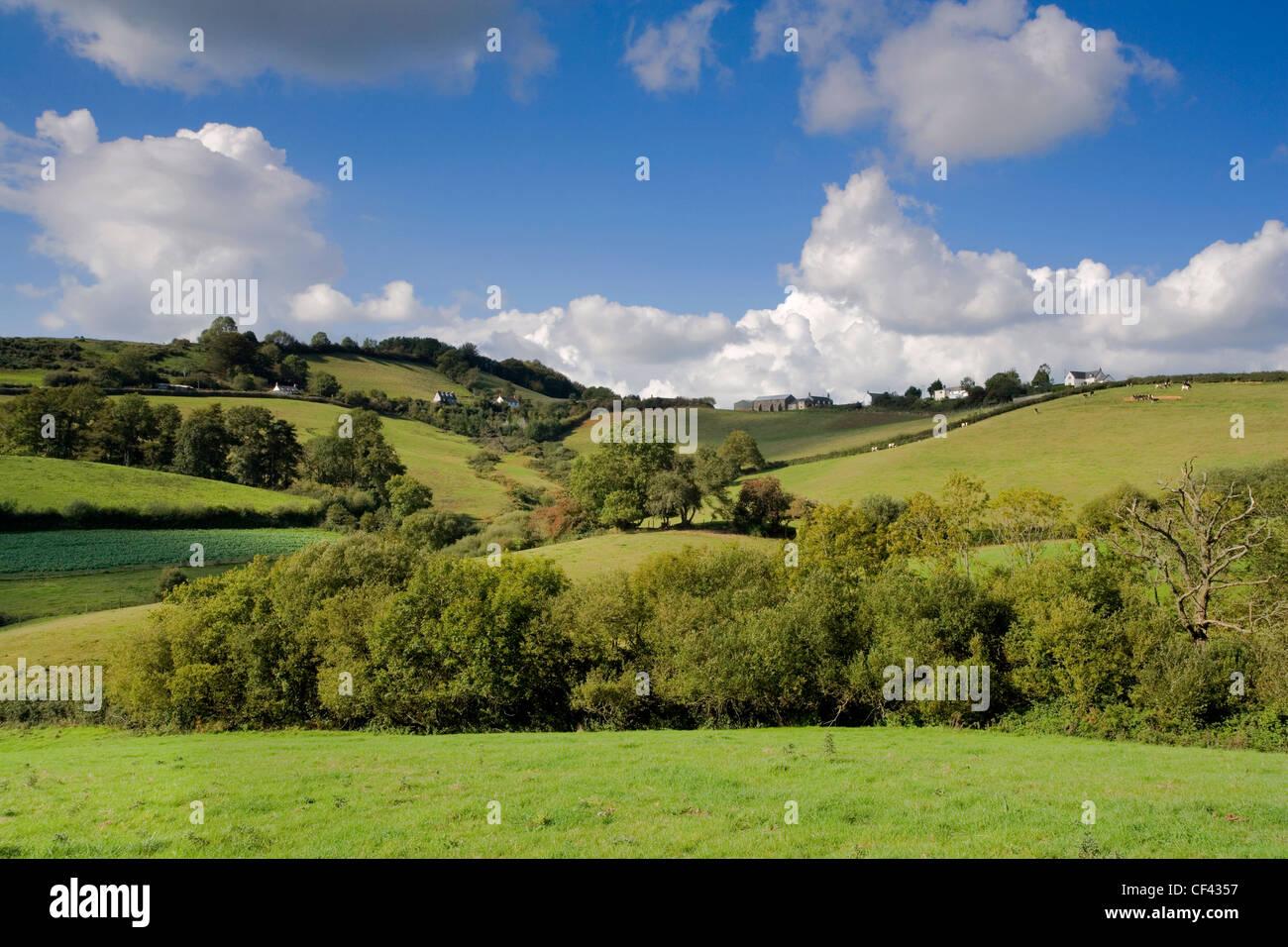View across a lush green valley towards the Dorset village of Birdsmoorgate. Stock Photo