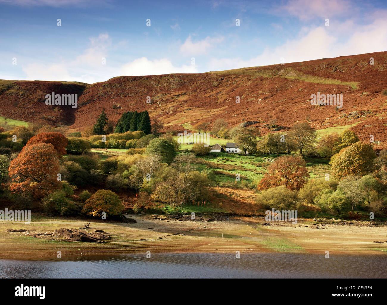 Autumnal colours on display on the hillside surrounding Garreg Ddu reservoir. - Stock Image