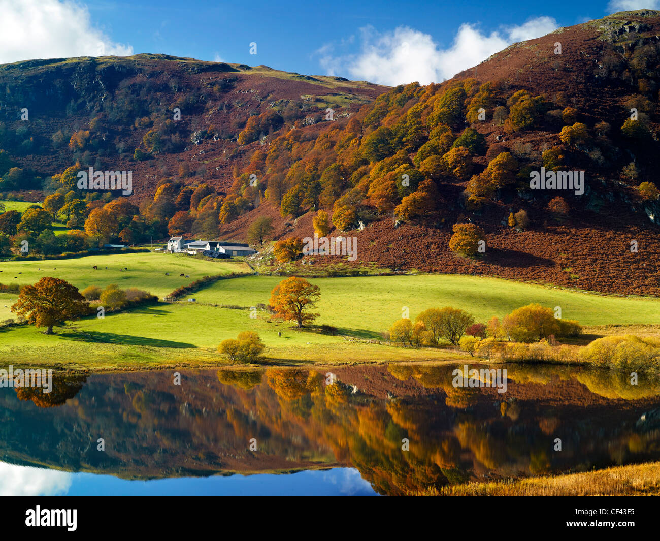 Autumnal colours on display in the Elan Valley. - Stock Image