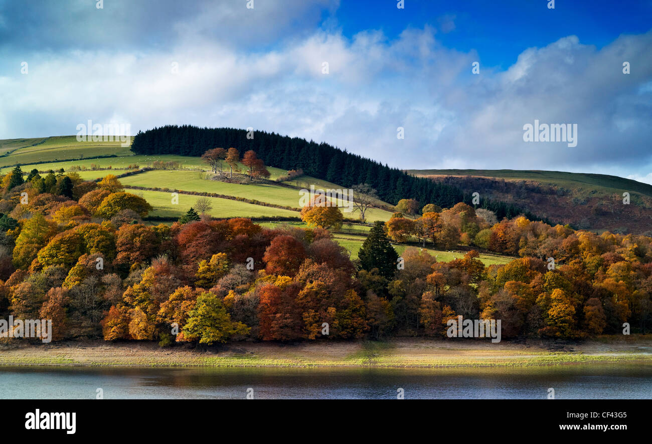 Autumnal colours on display from trees on the banks of Garreg Ddu reservoir. - Stock Image