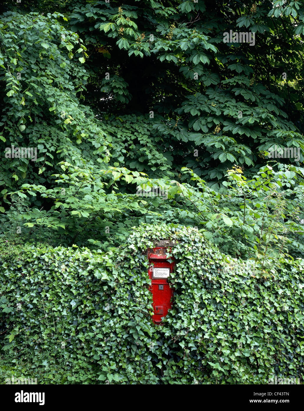 An ivy-clad rural letterbox against a flourishing leafy background. - Stock Image