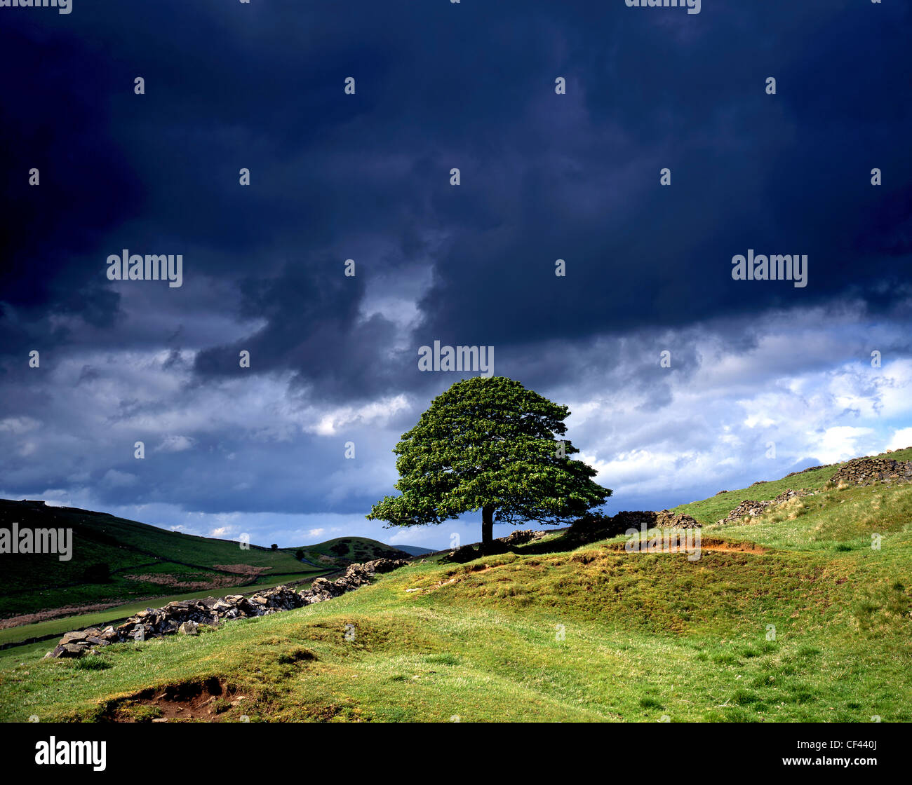 An isolated tree on a hillside in the Goyt Valley against a dark, stormy sky in the Peak District. - Stock Image