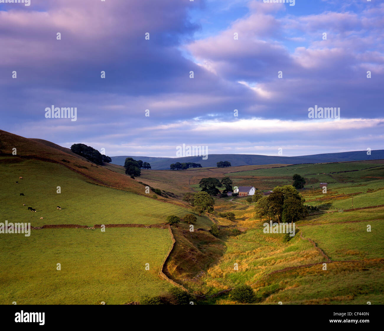 View across rolling hills in the Peak District on a summer evening. - Stock Image