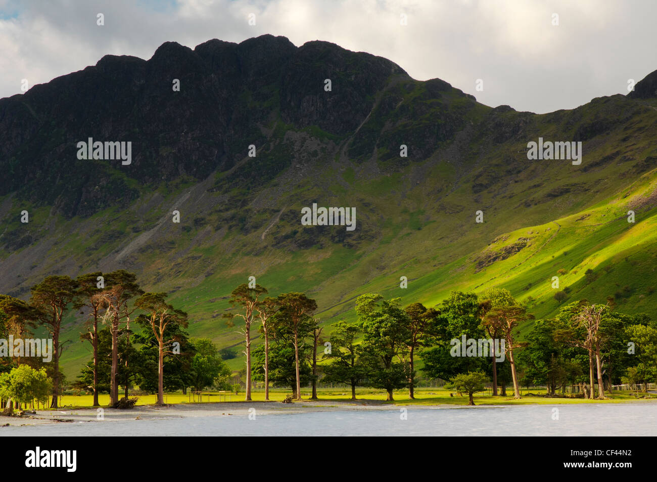 Dawn light backlighting pine trees at the head of Buttermere lake. - Stock Image