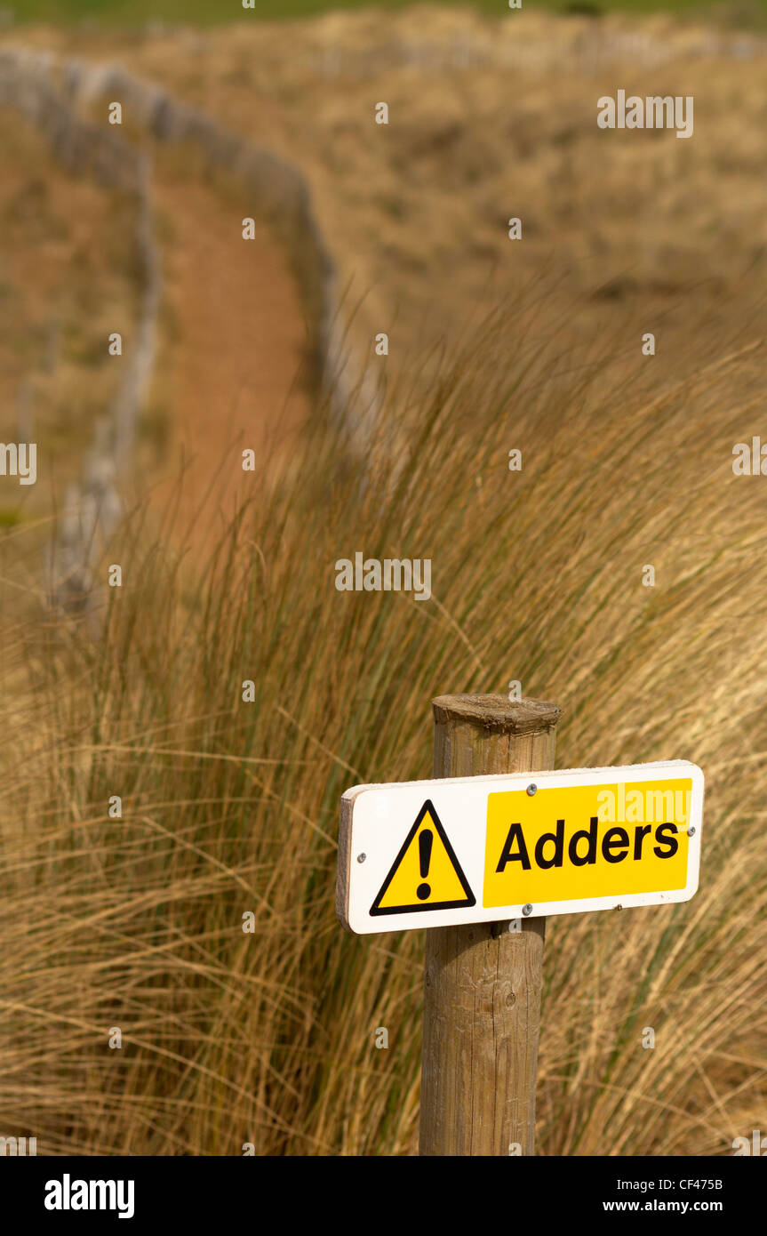 An Adders sign amongst long marram grasses in sand dunes at Bantham beach on the South Devon coast. - Stock Image