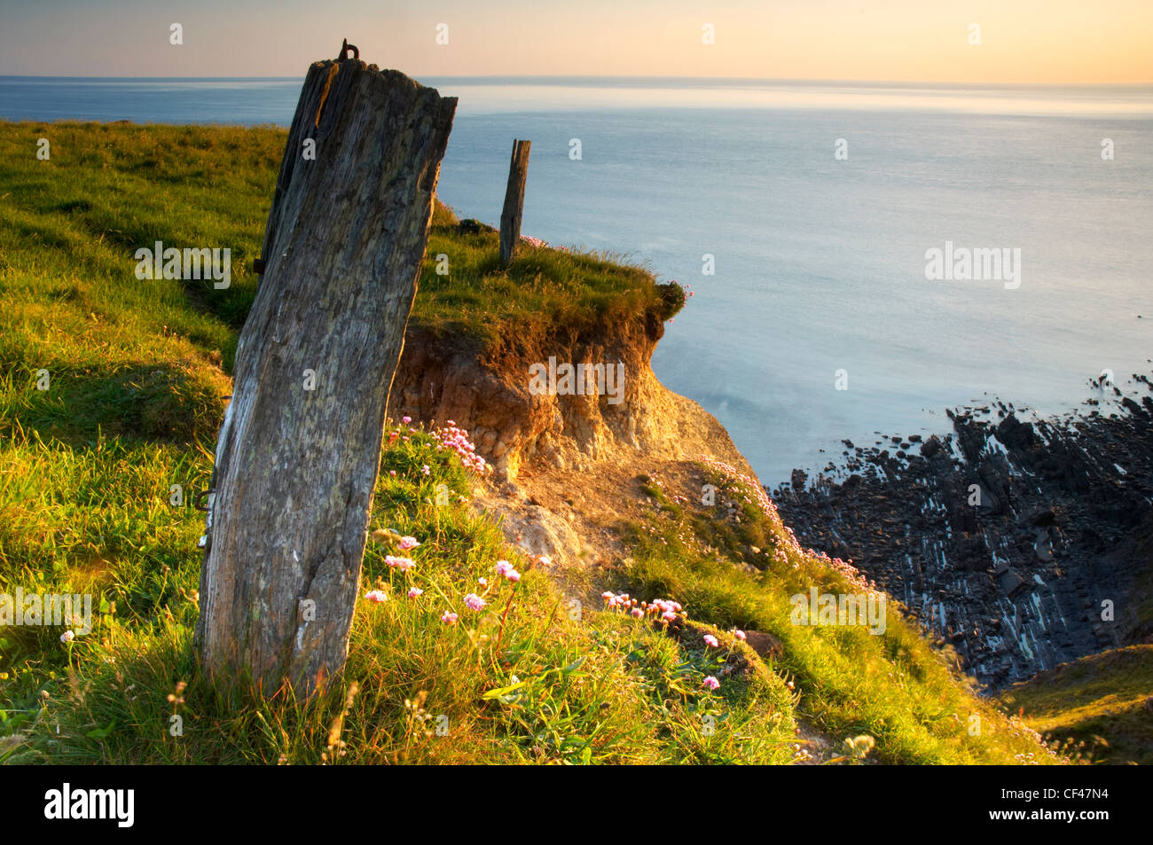 Old wooden posts in low evening light on the fragile clifftop at Upright cliff at Hartland Point in North Devon. - Stock Image