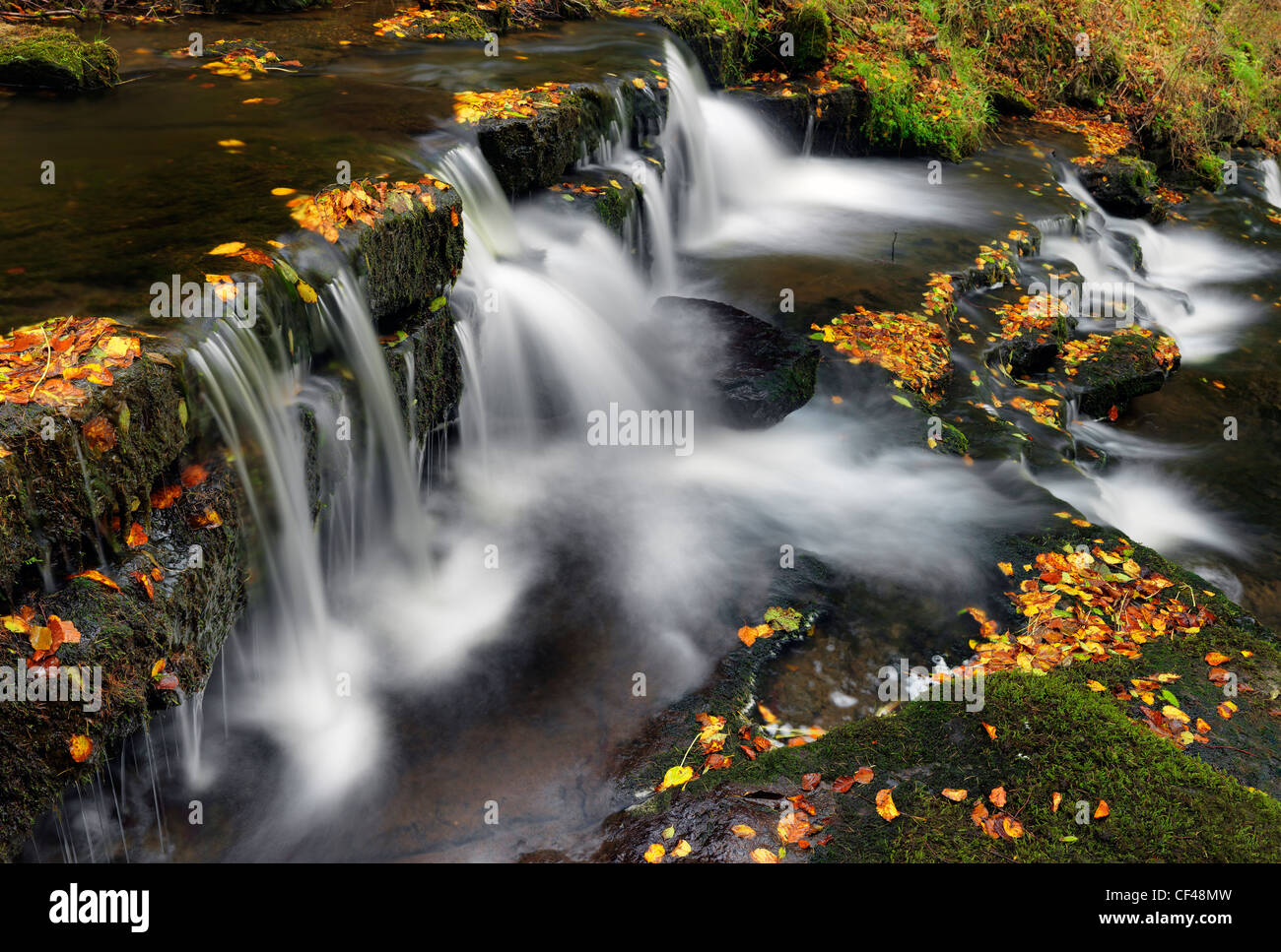 Autumnal leaves on rocky ledges of Scaleber Force, a waterfall in Stockdale on Scaleber Beck. - Stock Image