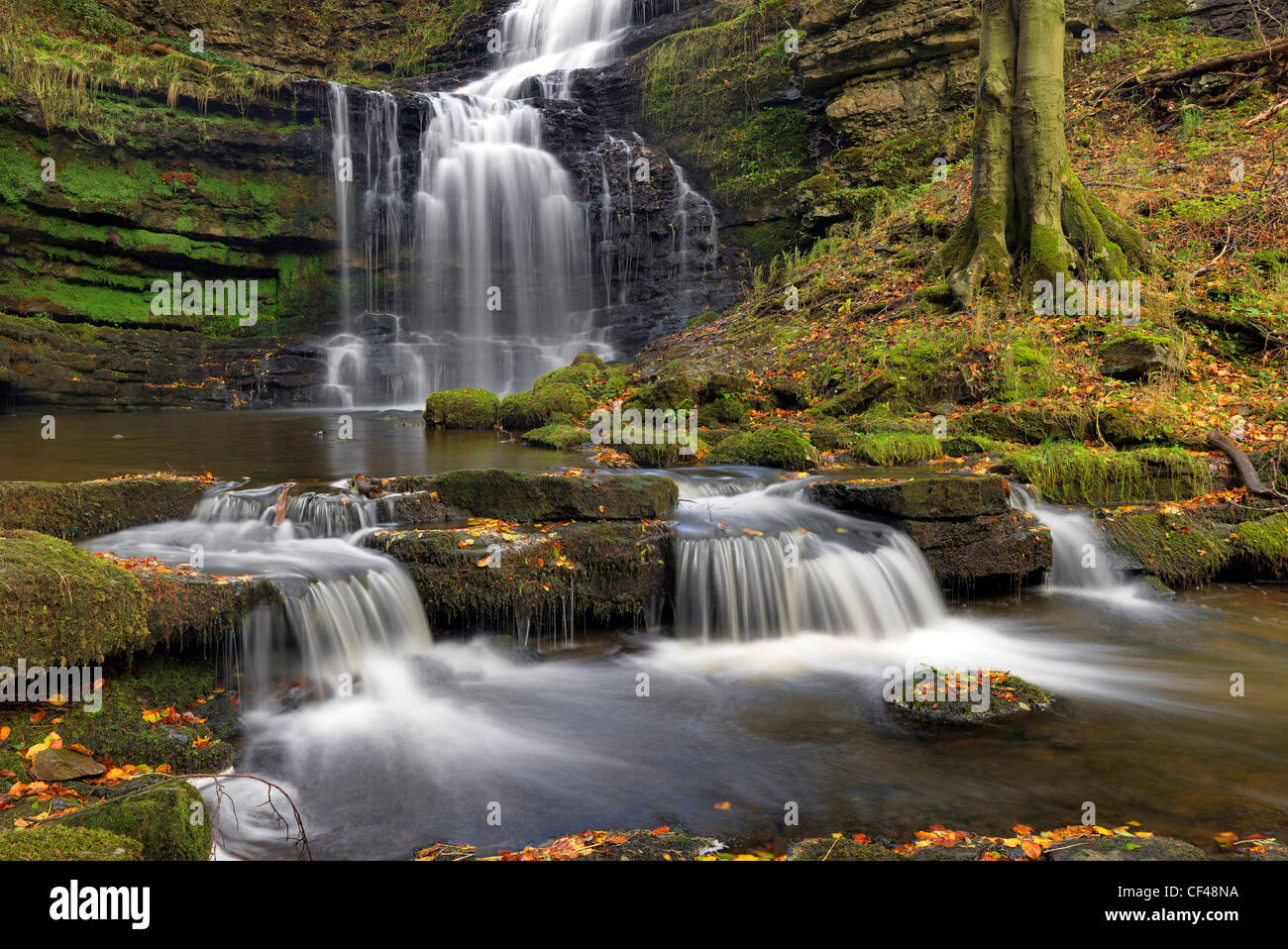 Scaleber force, an attractive waterfall on the Scaleber beck in Stockdale. - Stock Image