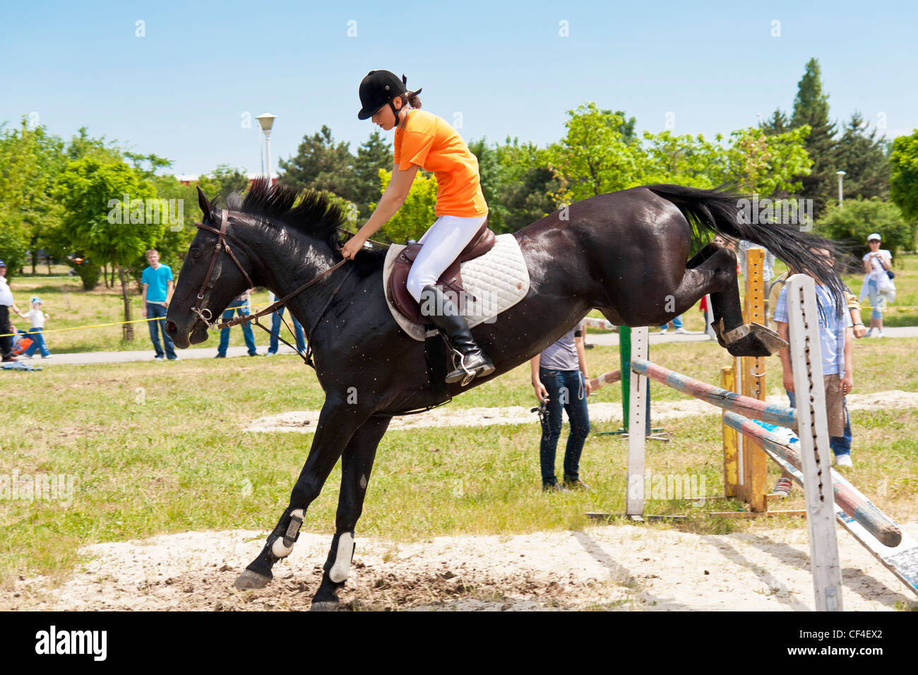 black horse jumping a hurdle in a public jump show stock photo