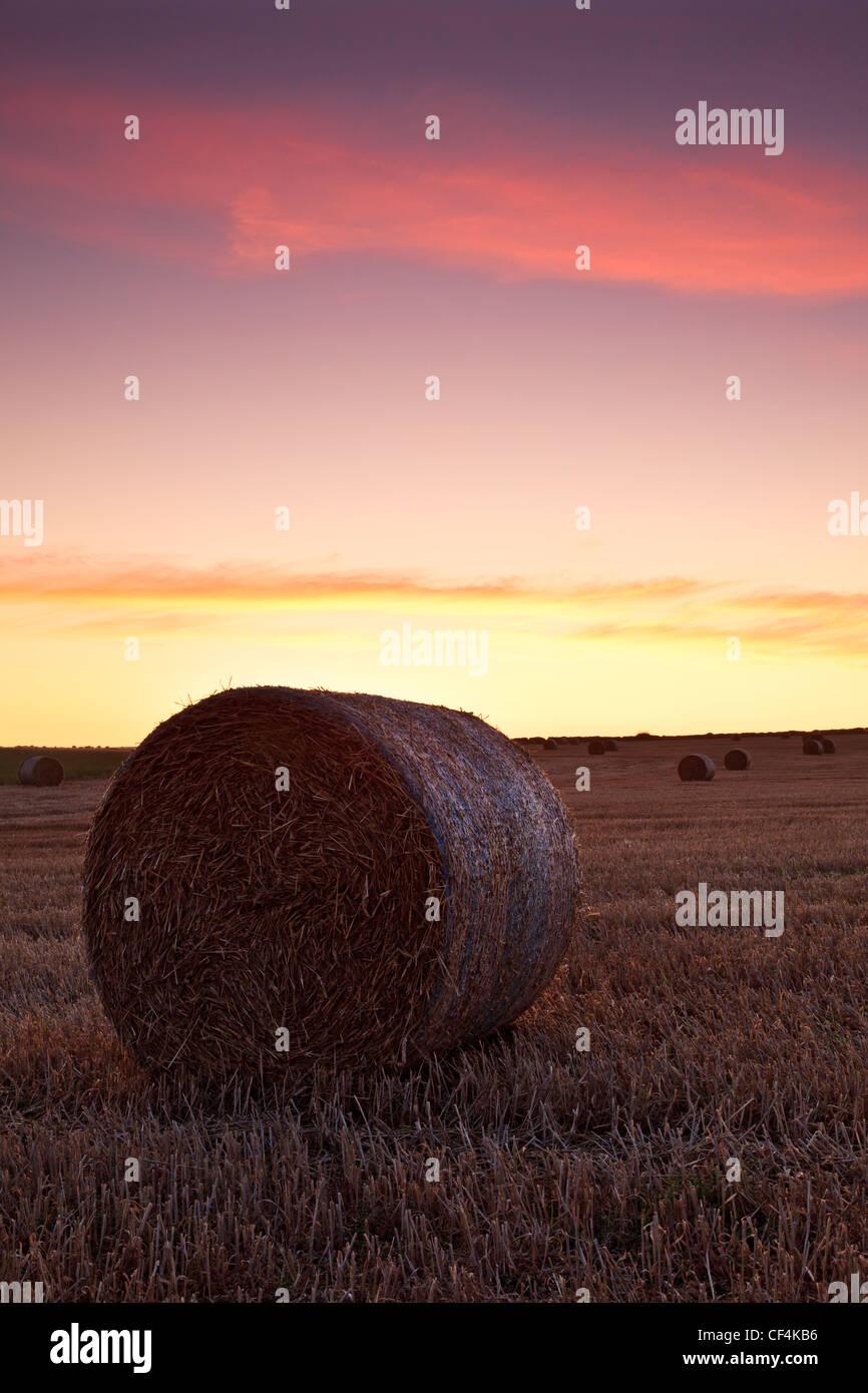 A round hay bale on farm land near Worth Matravers at sunrise. - Stock Image