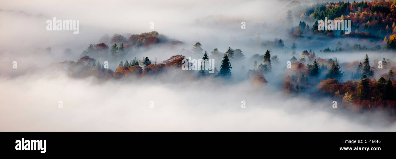 Trees surrounded by heavy mists on a cold autumn morning in the Lake District. - Stock Image