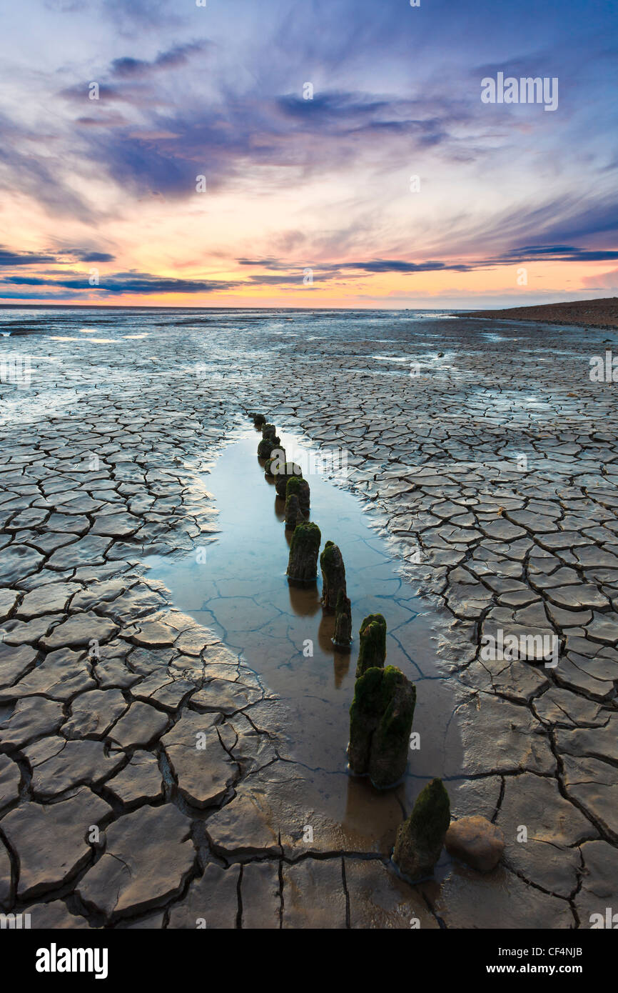 Short wooden stumps exposed by the low tide of The Wash, an estuary on the East coast of England where Norfolk meets - Stock Image