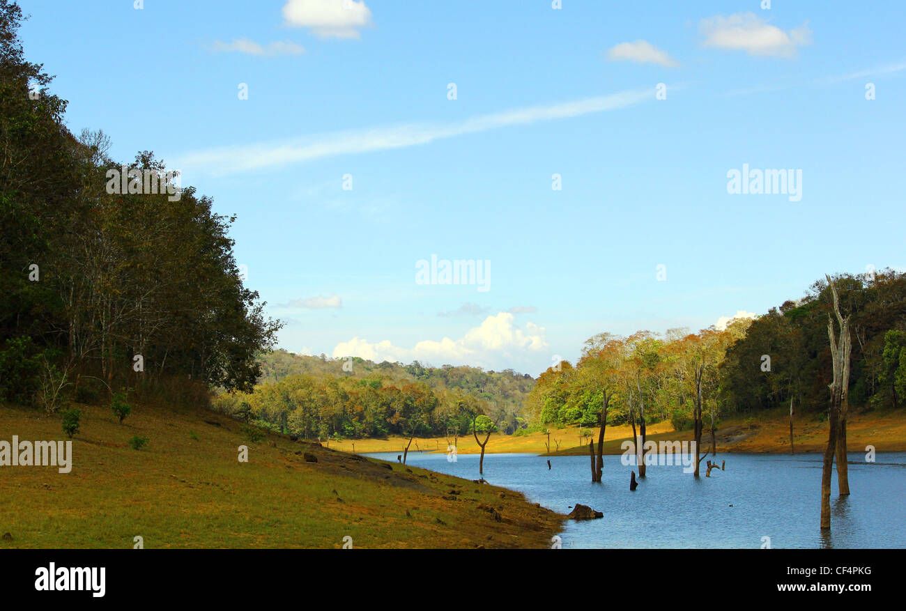 Thekkady, Periyar national park, Kerala, India - Stock Image