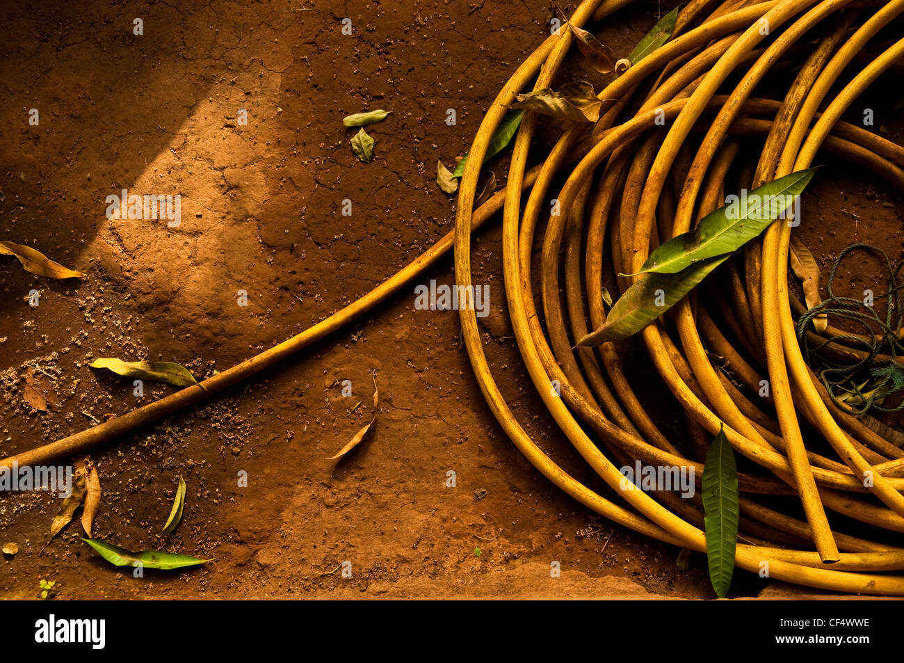 Yellow garden hose Stock Photo: 43748698 - Alamy