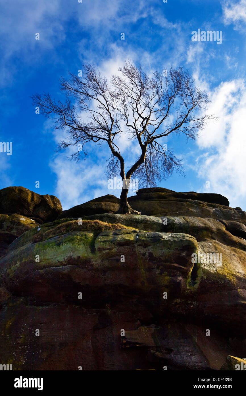 A lone tree standing on Brimham Rocks, a group of strange rock formations scattered over Brimham Moor. - Stock Image