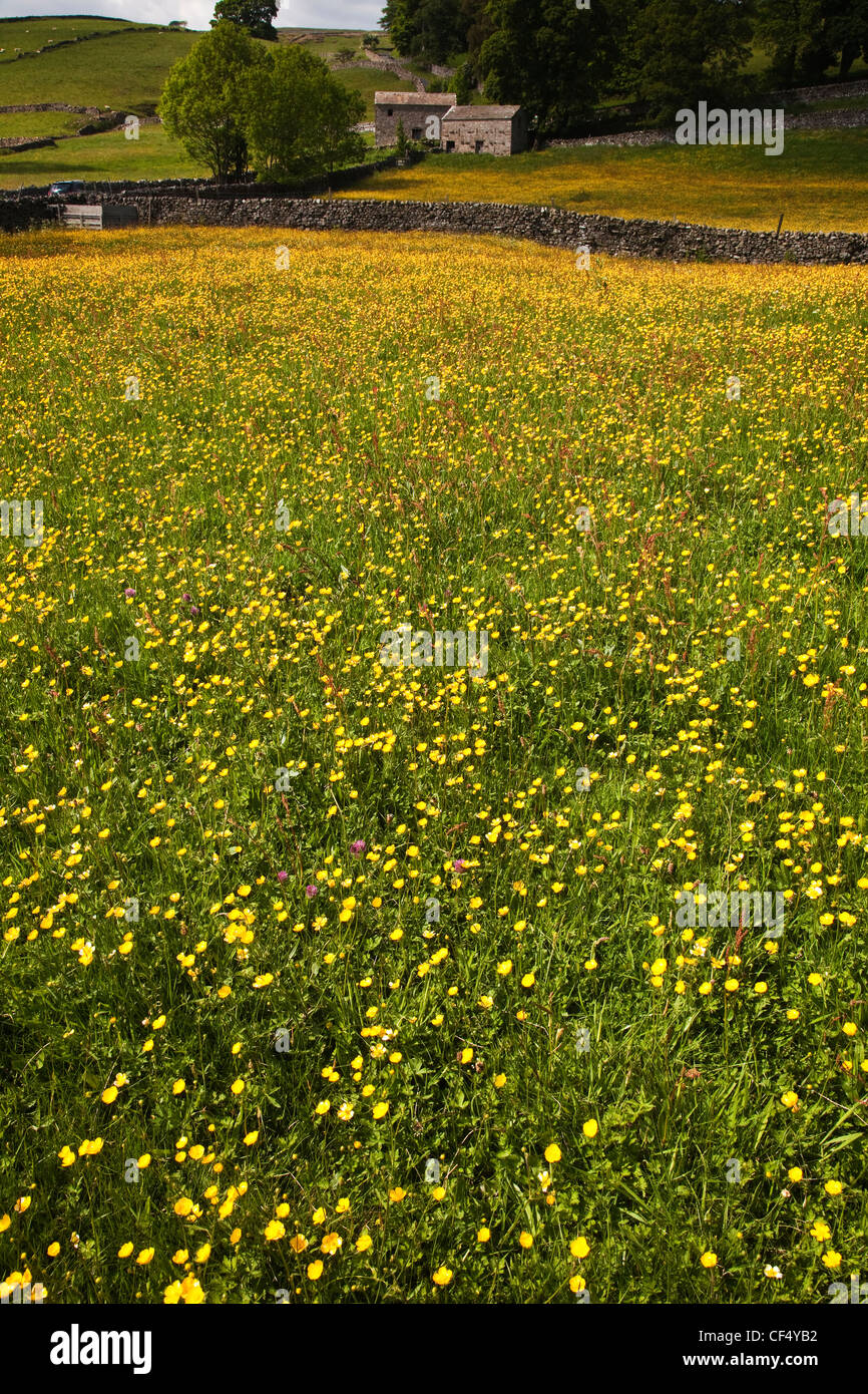 Wild Flower Meadow above Askrigg village, Wensleydale in the Yorkshire Dales. Stock Photo