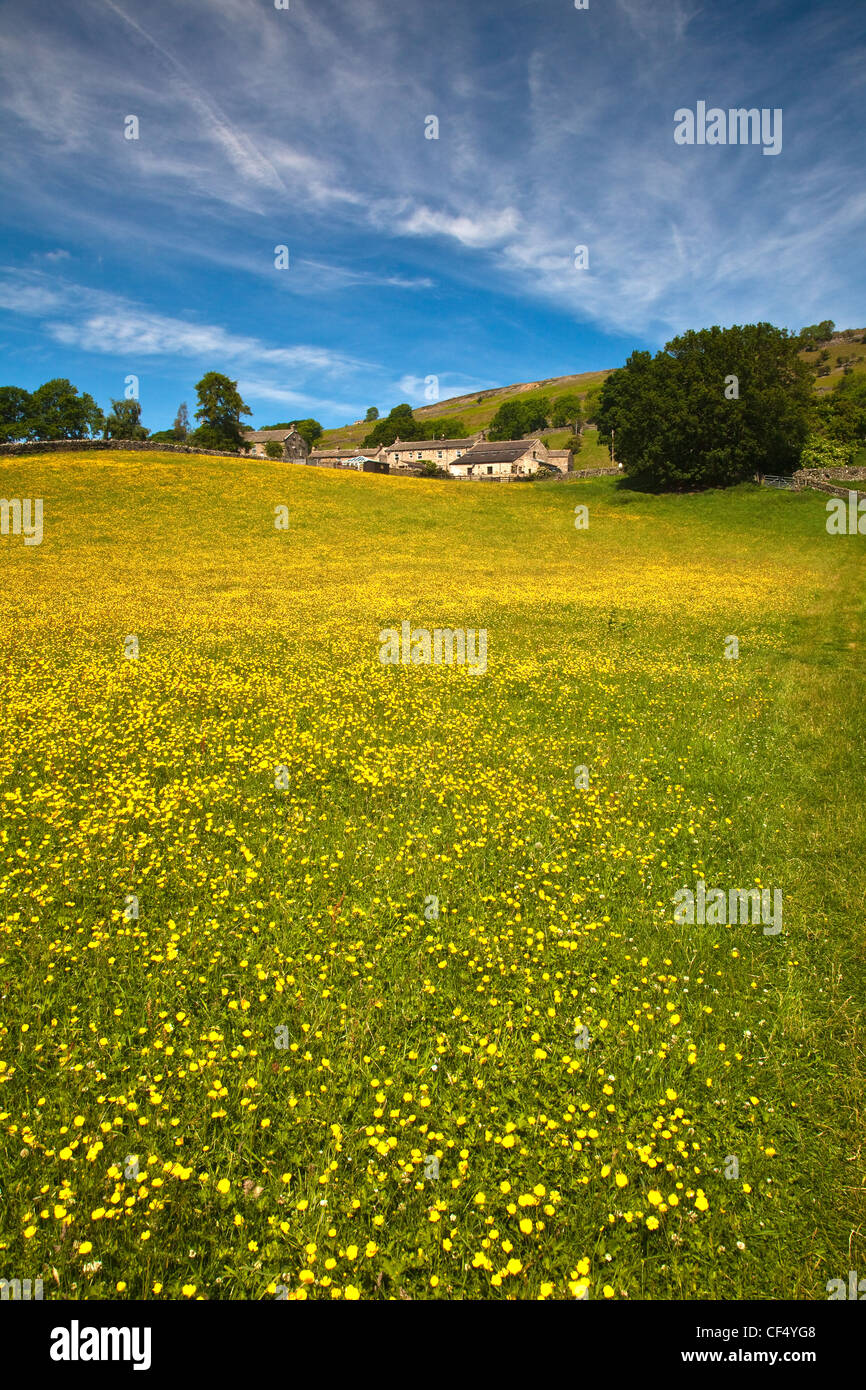 Wild flower meadow near Healaugh, Swaledale, Yorkshire Dales National Park. Stock Photo