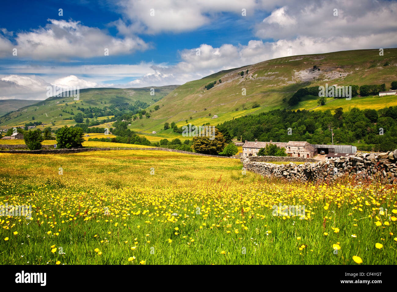 Wild flower meadow at Crowtees Farm near Muker, Swaledale, Yorkshire Dales National Park. - Stock Image