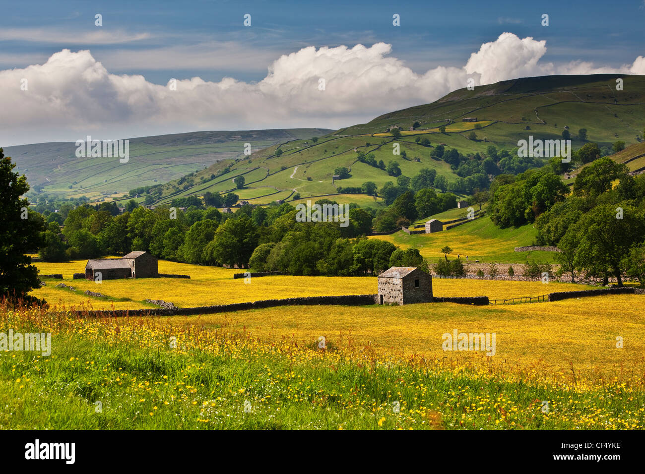 Stone barns in wild flower meadows near Muker, Swaledale, Yorkshire Dales National Park. - Stock Image