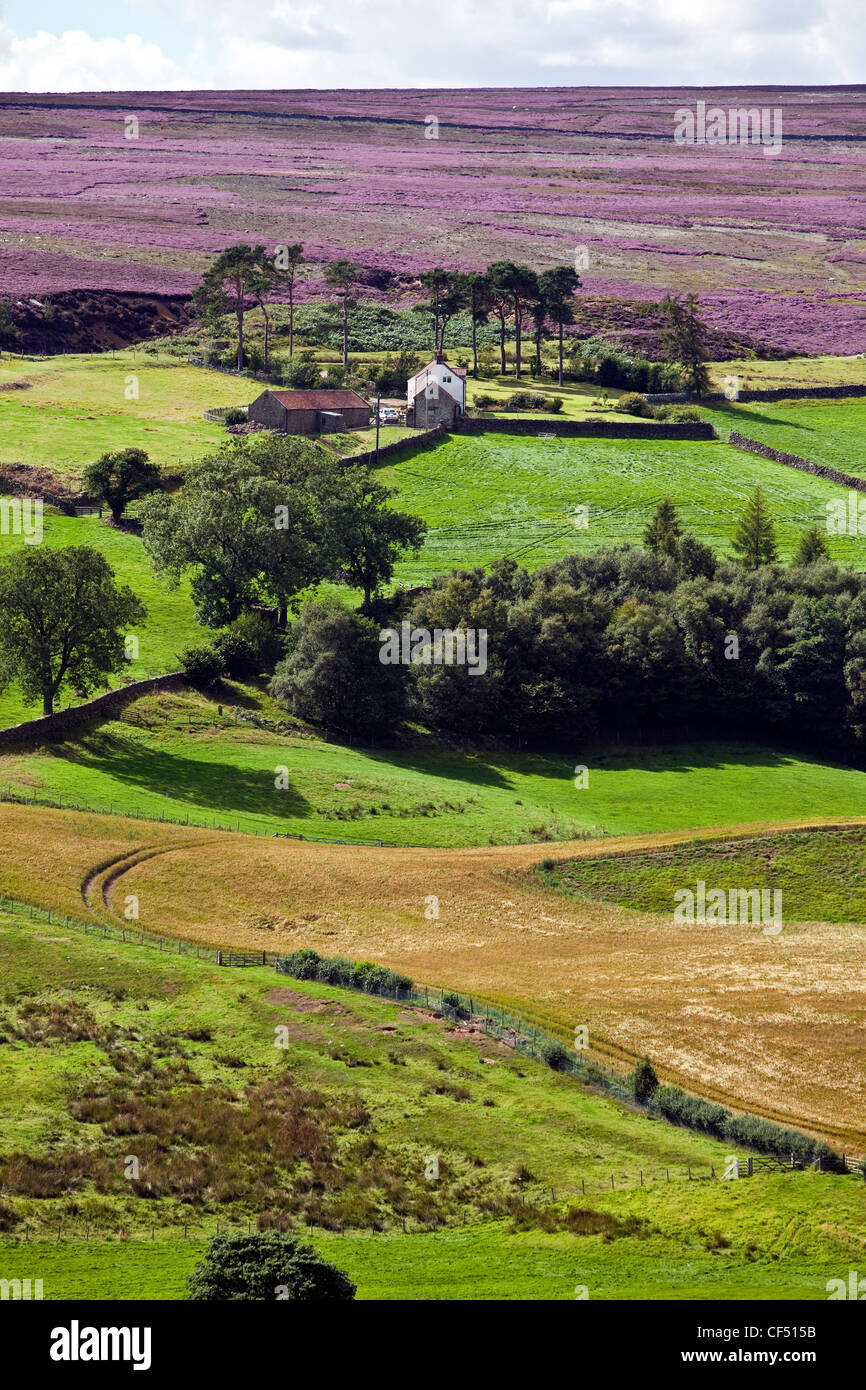 Scale Cross Farm on Commondale Moor in the North York Moors National Park. - Stock Image
