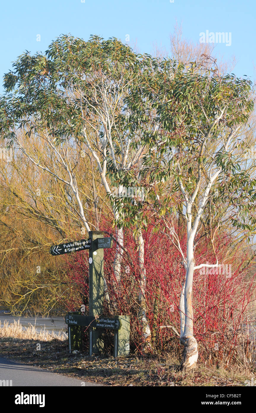 Sign for public footpath and Saltern's Way, Chichester Marina. Eucalyptus tree and red barked dogwood. February. - Stock Image