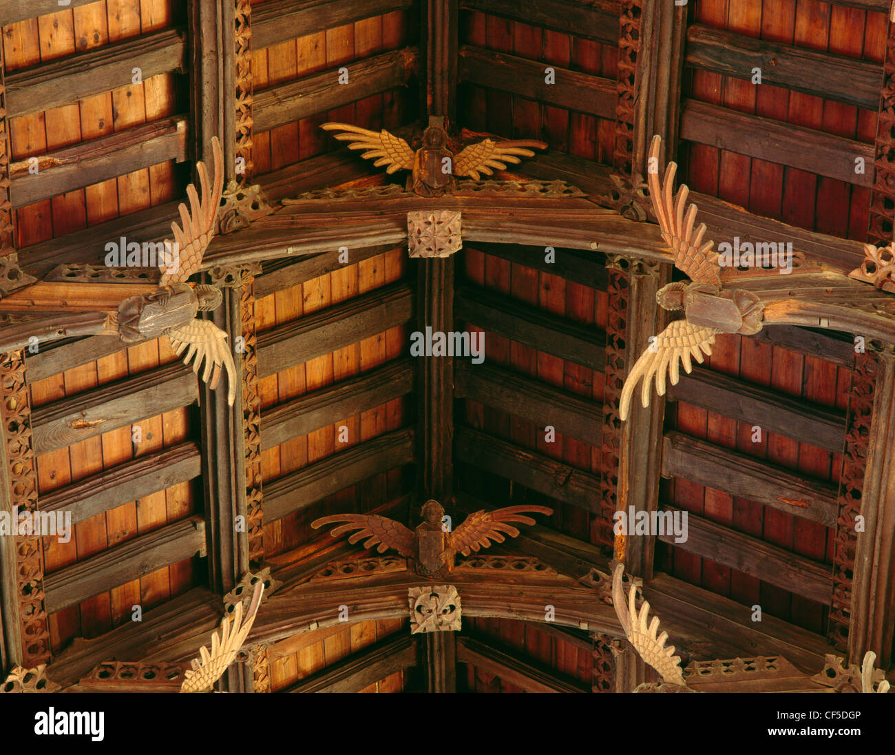 Part of the late 15th century double hammer-beam roof decorated with angels inside St Wendreda's church where - Stock Image