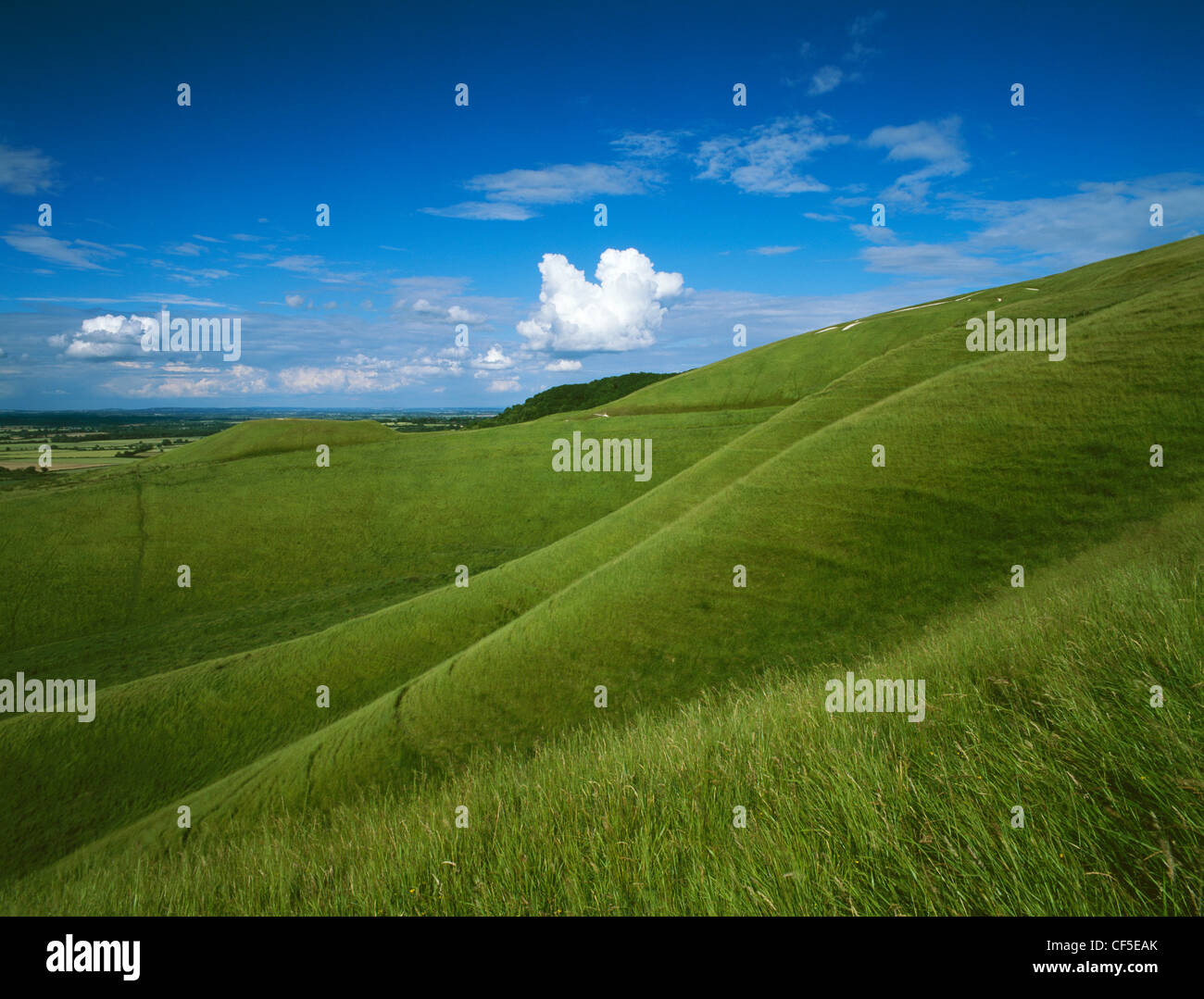 Looking over The Manger or Ring Pit below the chalk figure carved on the hillside of White Horse Hill with the flat - Stock Image