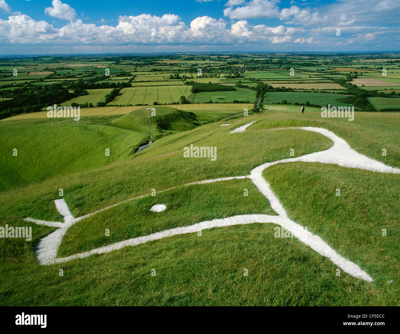 Head and eye of the chalk figure carved on the hillside of White Horse Hill above the flat-topped mound where St Stock Photo