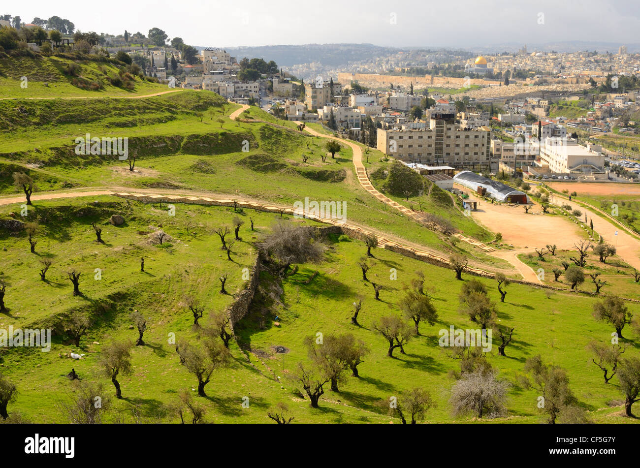 Hillside covered with olive trees in Jerusalem, Israel. Stock Photo