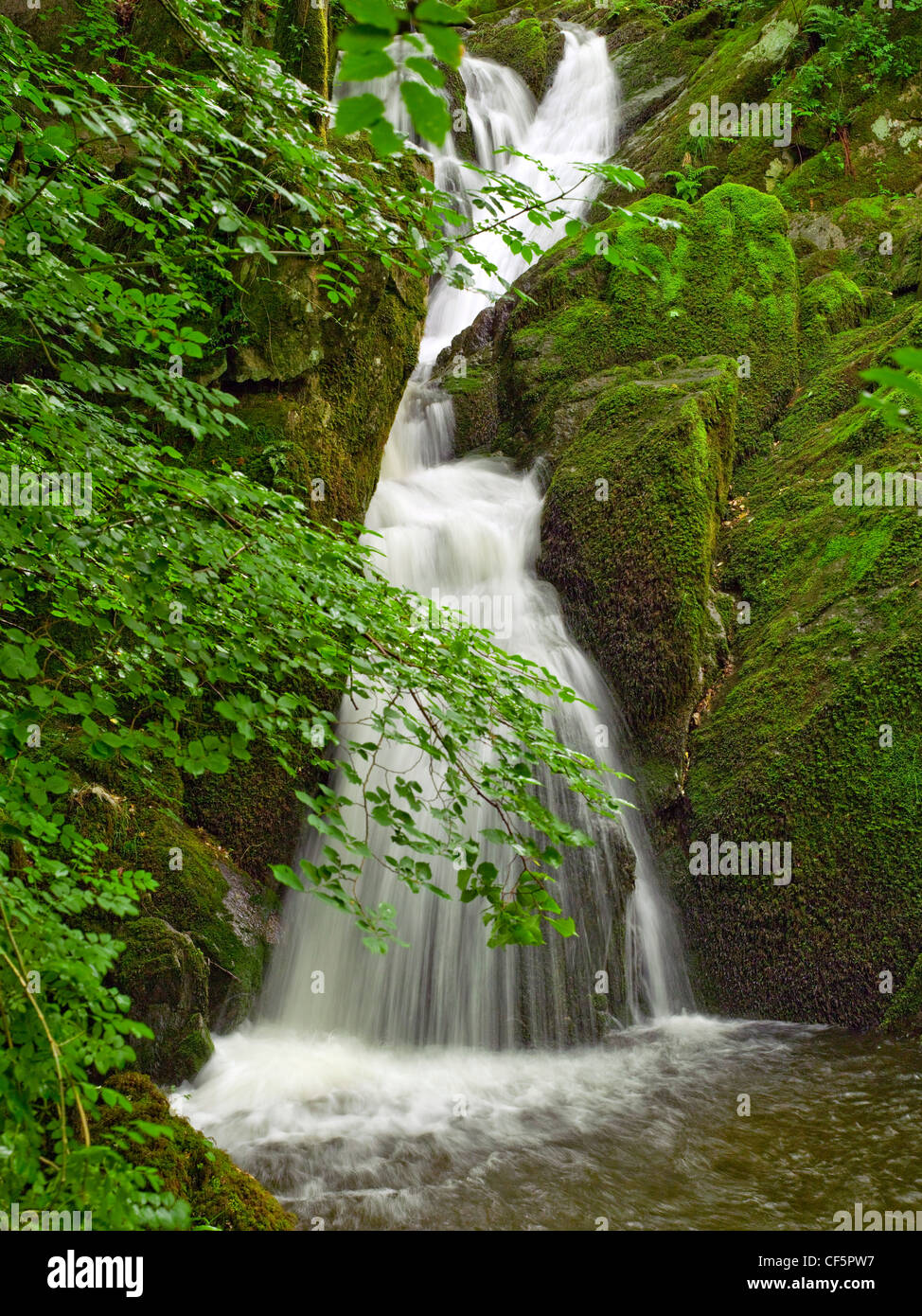 Stock Ghyll Force near Ambleside. - Stock Image