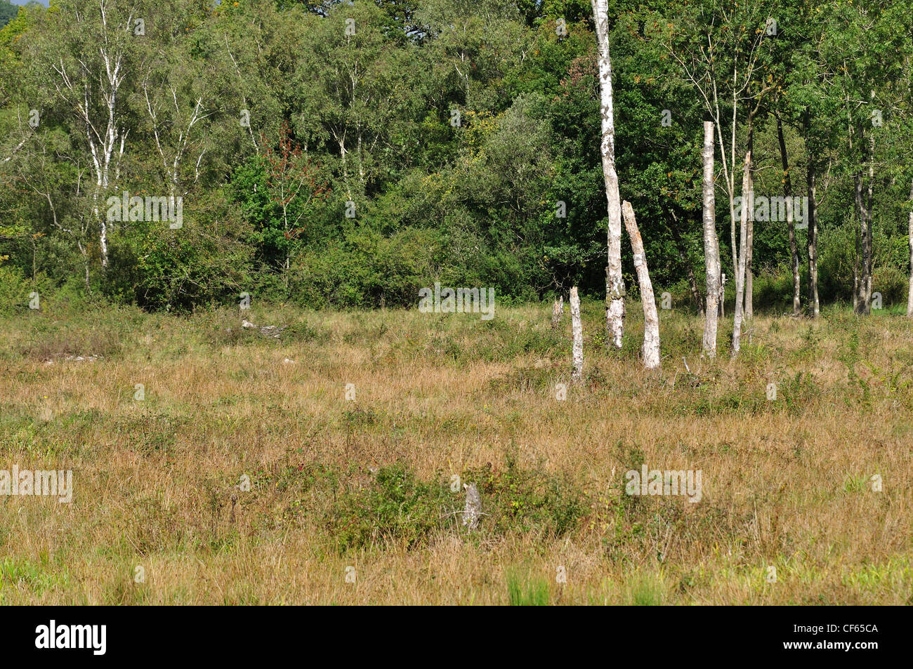 A view of a Dorset WIldlife Trust Reserve, Bracketts Coppice UK Stock Photo